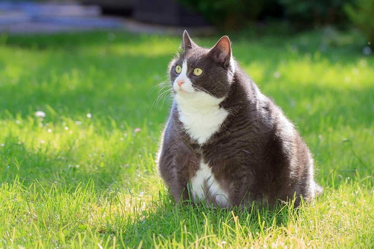 Maintenir un chat en forme